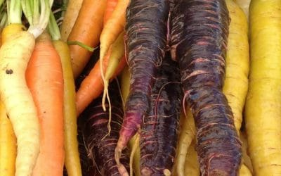 Produce for September 20 and 24, 2016