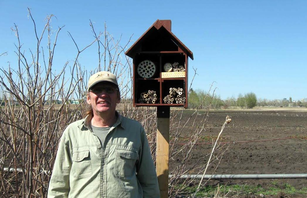 Nesting Boxes For Native Bees In Edmonton