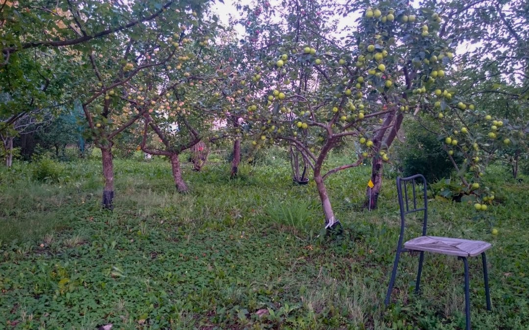 Guided Orchard Tour #1 2018
